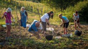 Family tour of Romania - Help with daily chores at a farm