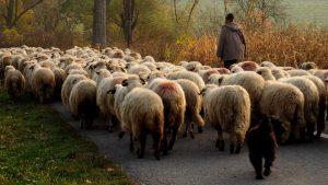 Photo Tour in Transylvania - Shepherd