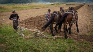 traditional farming in romania