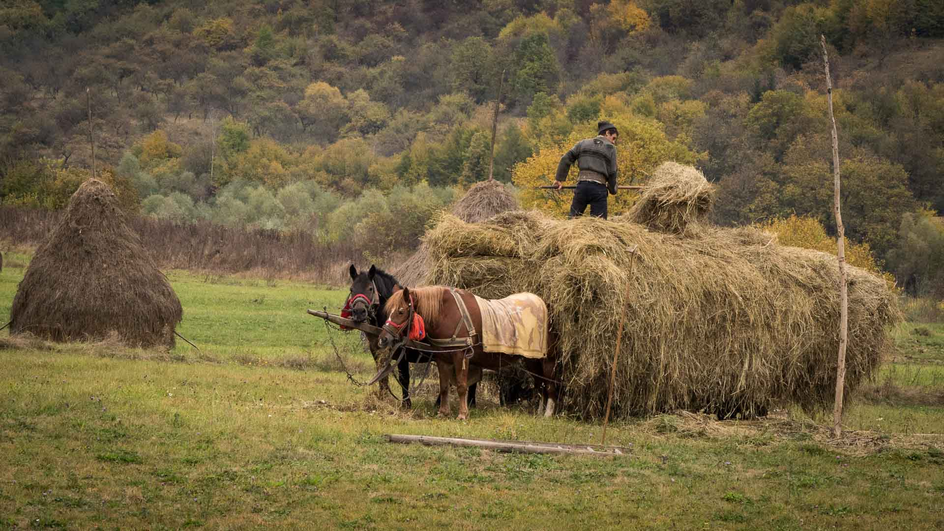 Photo Tour of Romania during Harvest Times