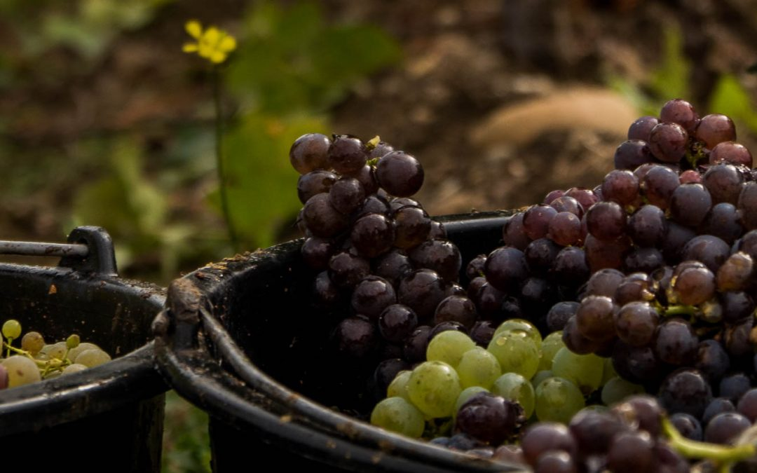 Romanian Wines - a short guide to a refined delight