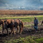 Photography Tour of Romania during Harvest Time