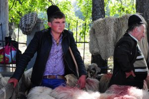 sheep fair sibiu