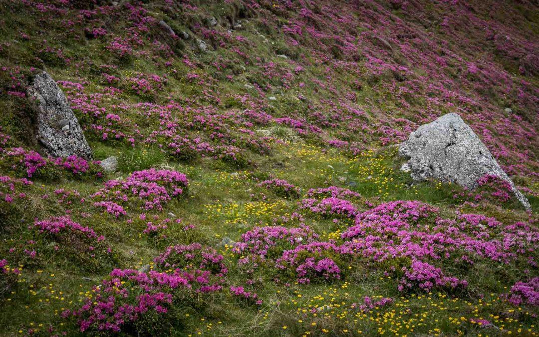 Wildflowers in Romania