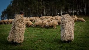 Traditional Crafts and Occupations - Shepherding