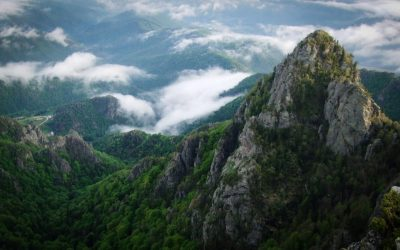 Romanian beech forests included in the UNESCO World Heritage List