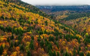 Fall in Romania - Nature dresses itself in a multitude of colors