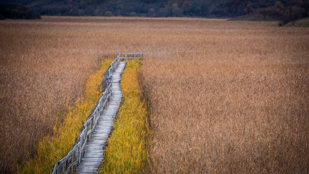 The reed beds of Sic, Cluj