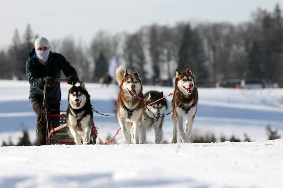 Riding a dog drawn sleigh