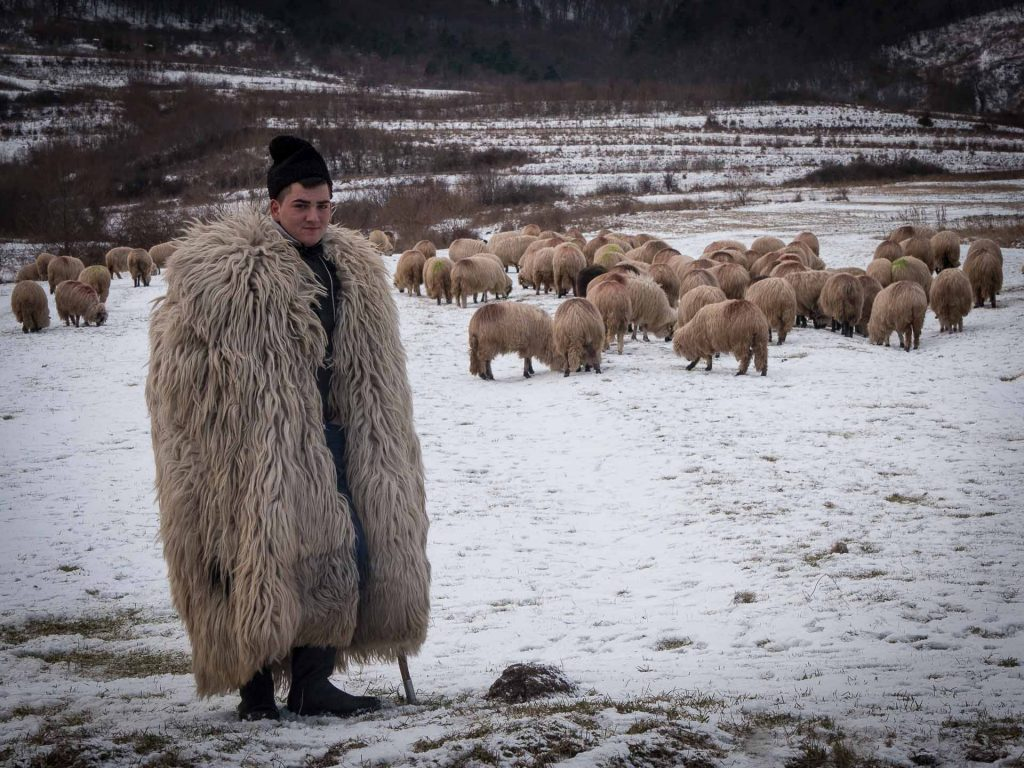 Shepherds in Romania