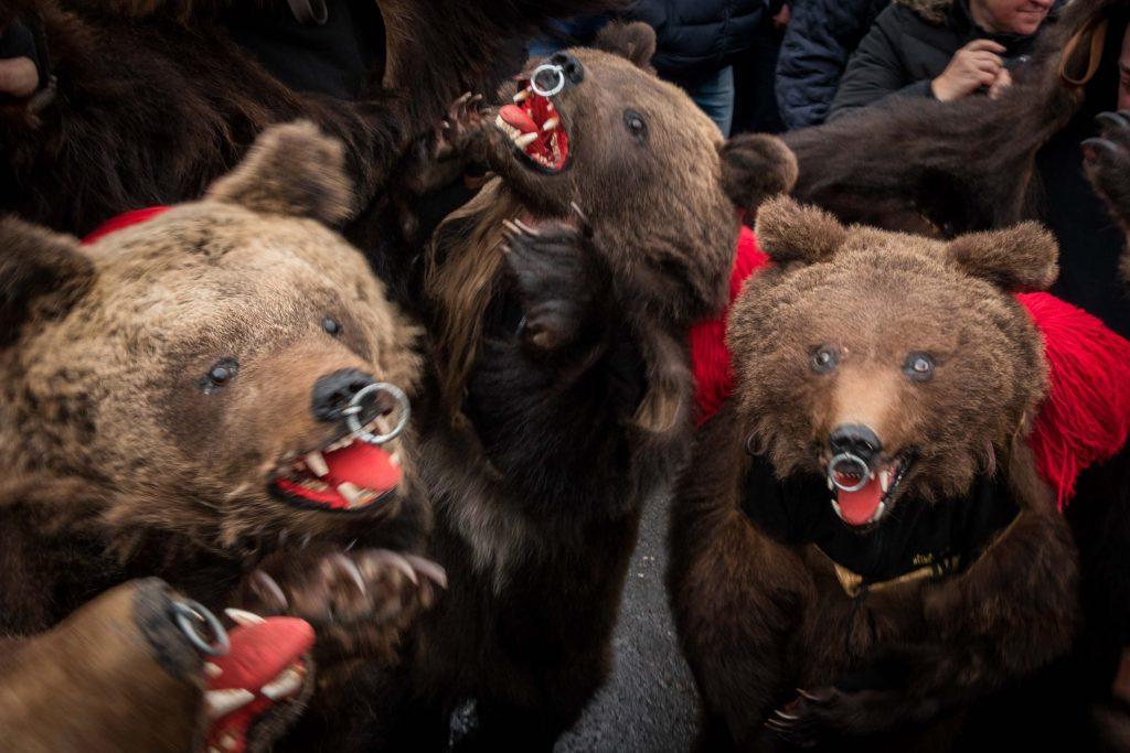 Bears festival