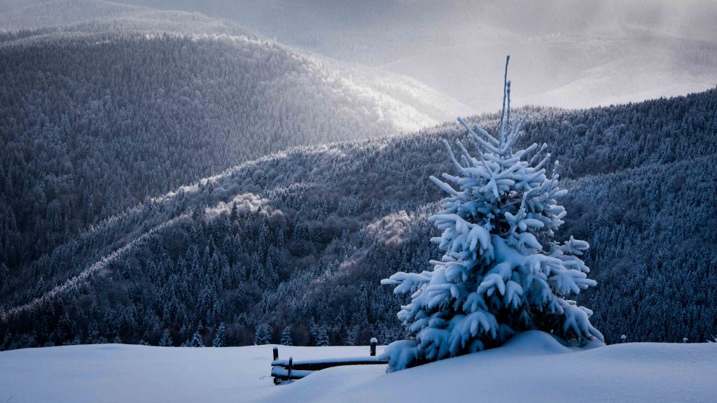 Beautiful winter scenary - Romania winter photo tour