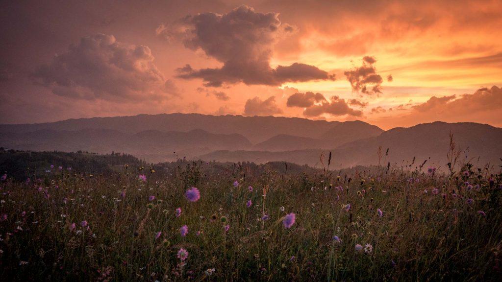 Pink sunsets and orange skies