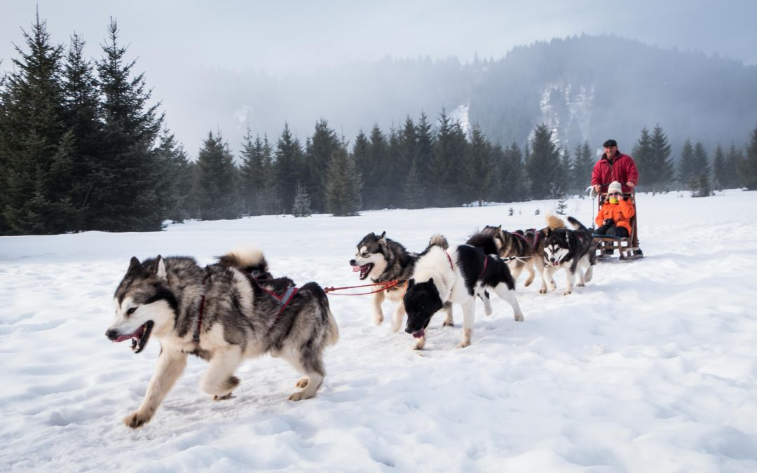 Dog-sledge ride in Romania