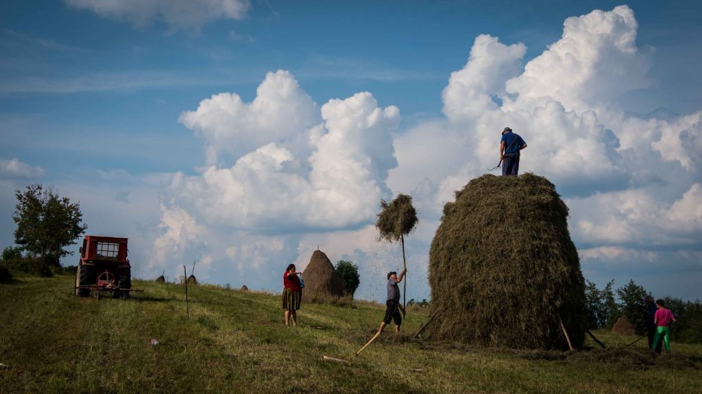 People working the field - rural Romania
